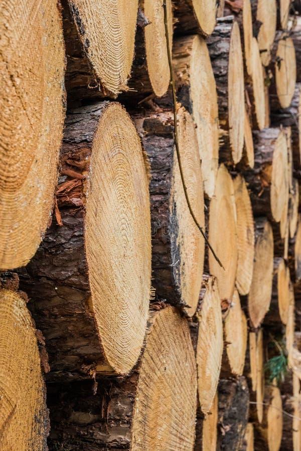 Verminder houten gestapelde boomstammen op elkaar royalty-vrije stock foto's