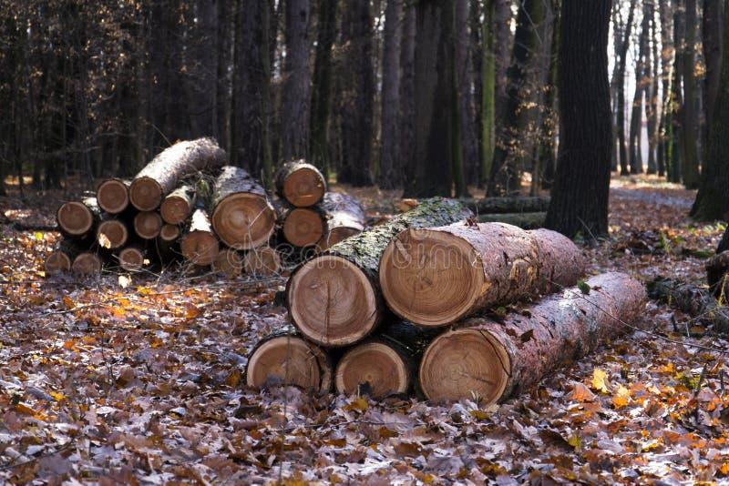 Verminder houten logboekenstapel ligt in de herfstbos royalty-vrije stock afbeeldingen