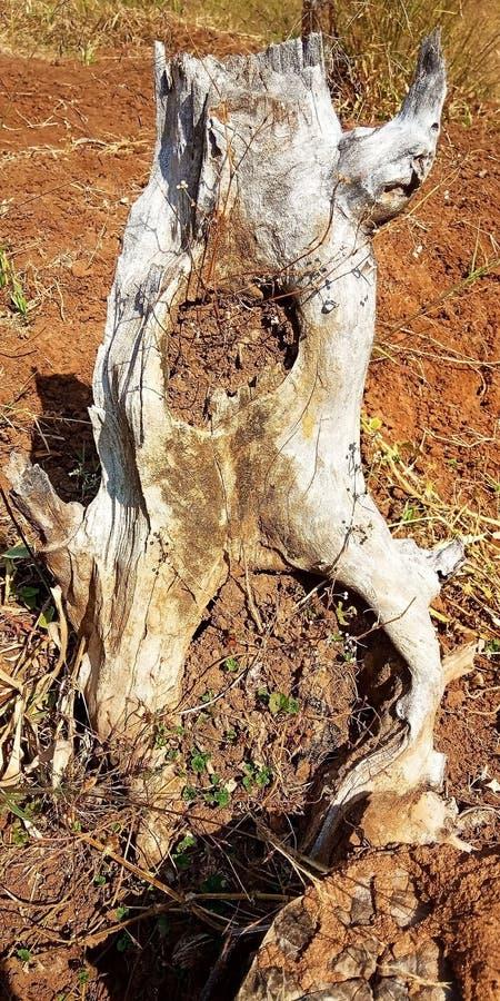 Verminderde bomen stock foto's