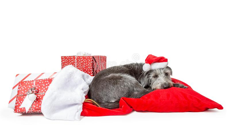 Vermoeide Santa Claus Dog With Christmas Presents royalty-vrije stock afbeelding