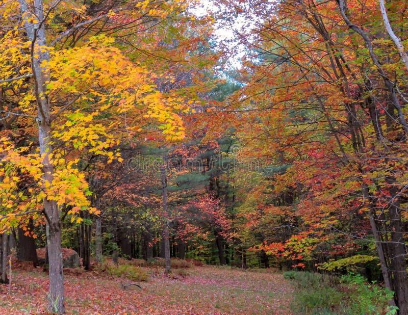 Vermont Autumn Glade fotografering för bildbyråer