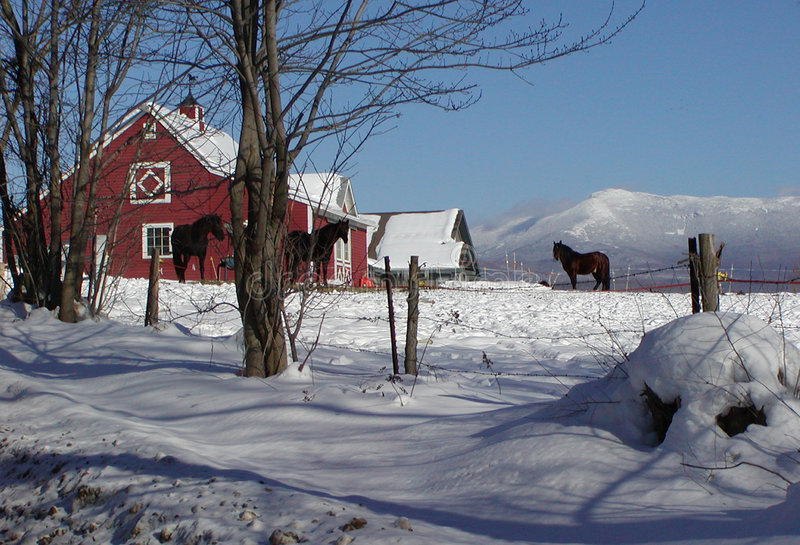 Vermont Horse Barn stock image