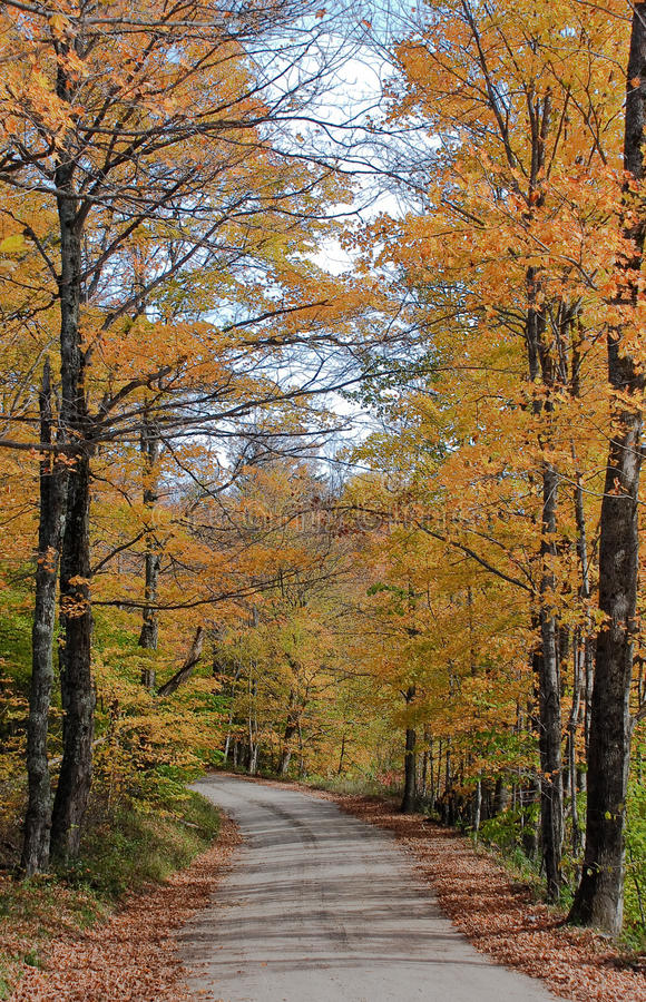 Download Vermont path in Autumn stock photo. Image of vegetation - 27911020