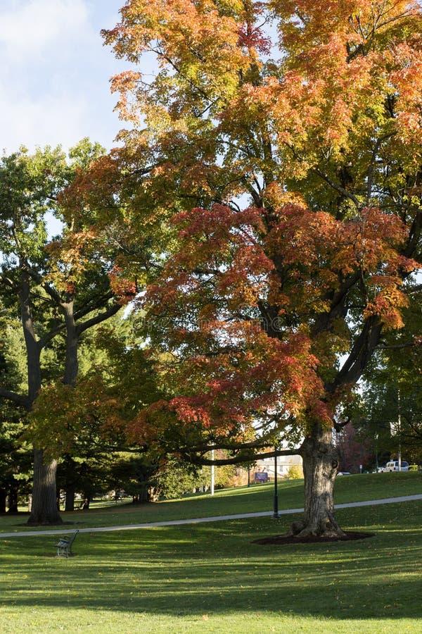 Vermont uniwersyteta park zdjęcie royalty free