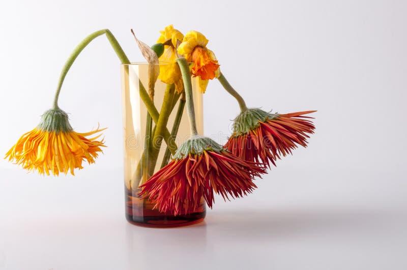 Vernietigde bloemen stock fotografie