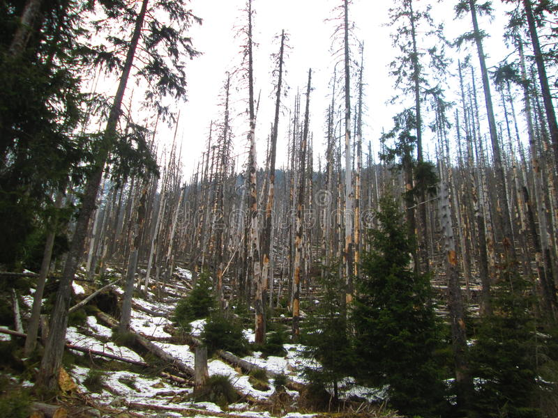 Vernietigde bomen stock fotografie