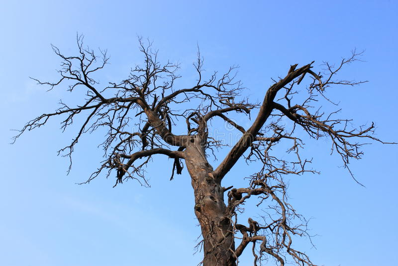 Vernietigde bomen stock afbeelding