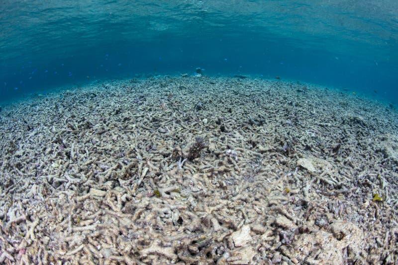 Vernietigde Coral Reef in Raja Ampat stock fotografie