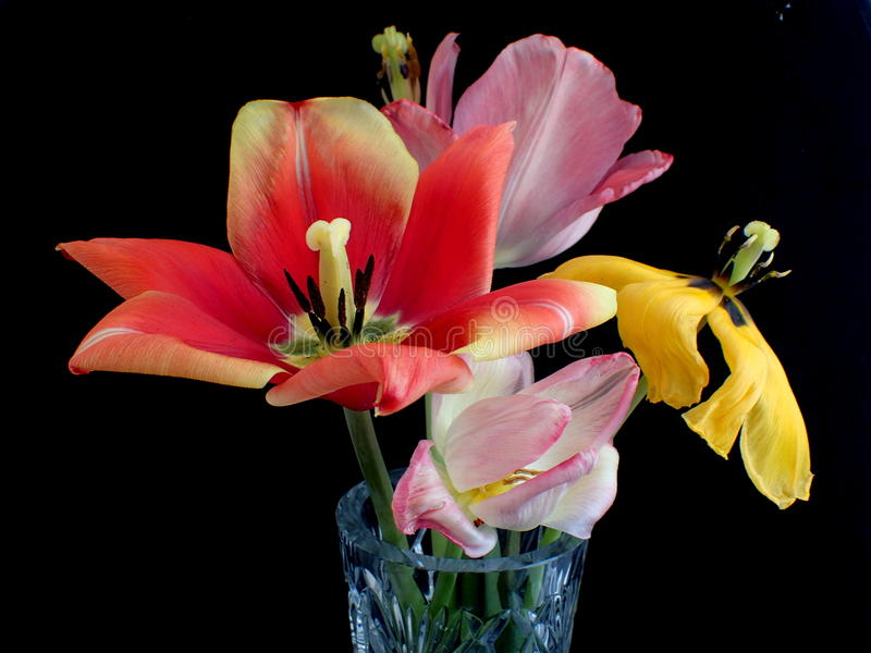 Vernietigende tulpen in een vaas royalty-vrije stock afbeeldingen