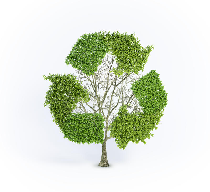 Vernieuwbare boom stock illustratie