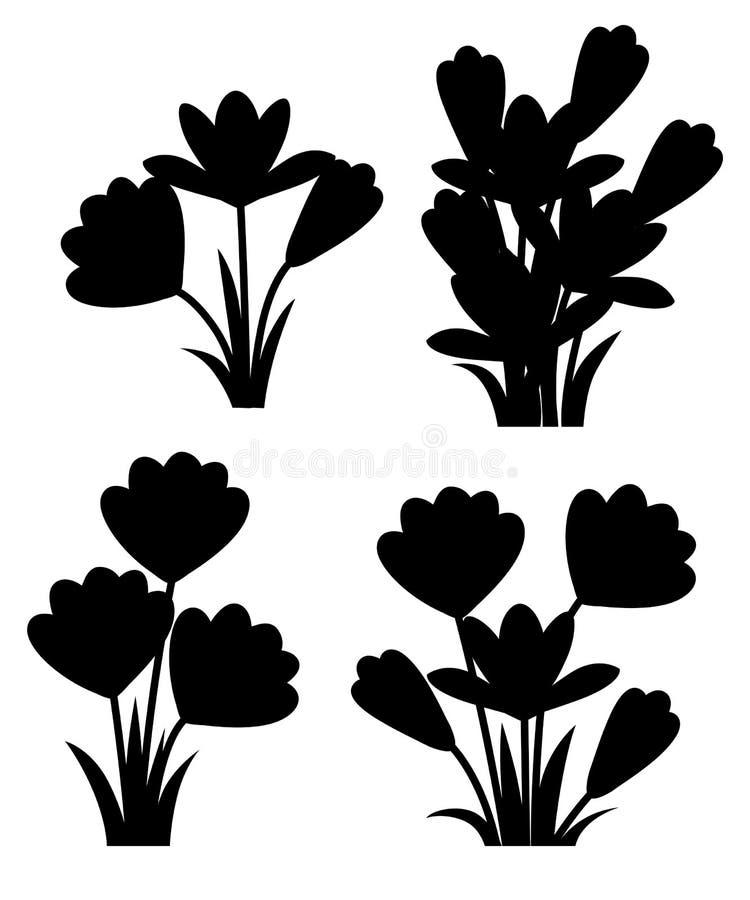 Μαύρη σκιαγραφία Πορφυροί κρόκοι Κρόκος ανοίξεων vernus κρόκων, γιγαντιαίος κρόκος Πορφυρό πρόωρο λουλούδι άνοιξη E ελεύθερη απεικόνιση δικαιώματος