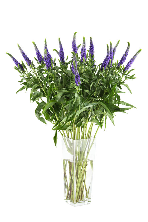Veronica de fleurs photos stock