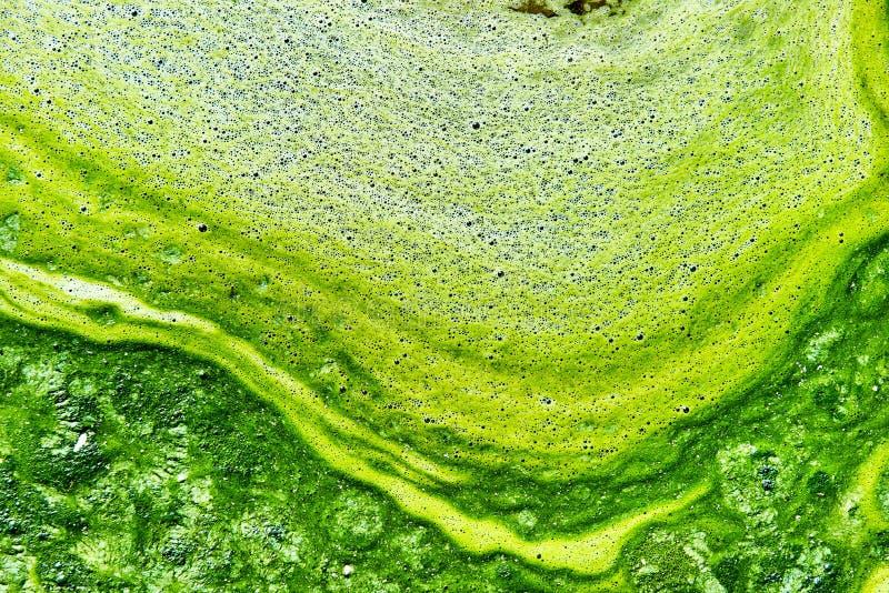 Verontreinigd water met algen stock foto's