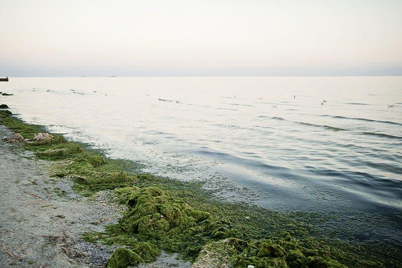 Verontreiniging van het overzees met plastic zakken Ecologieprobleem Vuile overzees in zeewier Het overzees bloeit royalty-vrije stock afbeeldingen