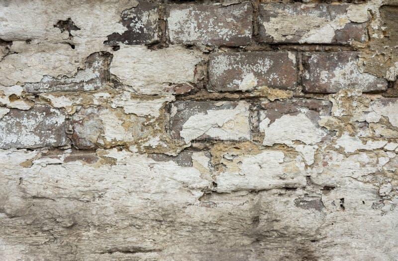 Verontruste Doorstane Bakstenen muur met Gepeld van Pleister Wit Grey Color Shades met Grungy Haveloze Textuur Gebarsten Bevlekt stock foto's