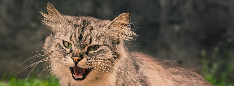 Verontwaardigde kat in de werf De banner van het Web stock foto's