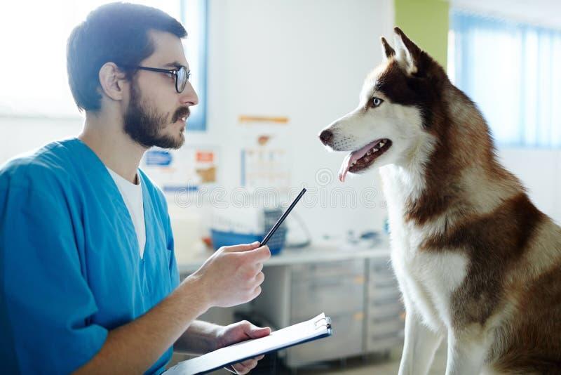 Verordnung zum Hund lizenzfreie stockbilder