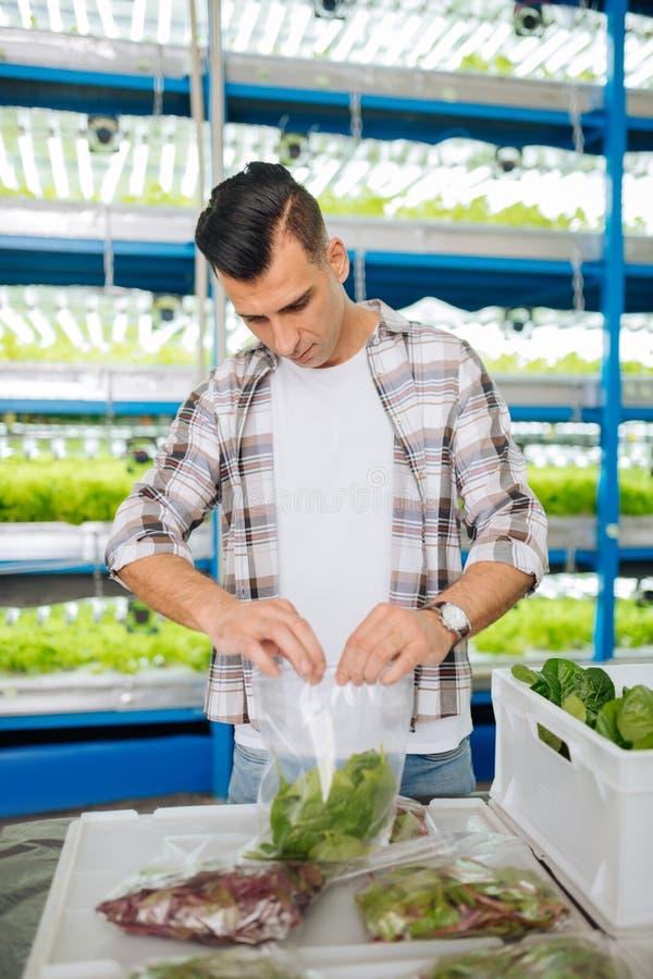 Verpackende Grüns des dunkelhaarigen Landwirts in Plastiktasche lizenzfreie stockfotos