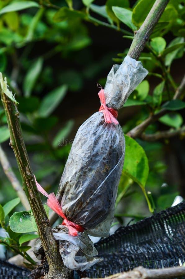 Verpflanzter Baum lizenzfreie stockfotos