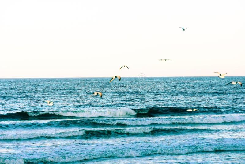 Verpletterende Blauwe Golven en Zeemeeuwen langs de Kust van de Stranden van Florida in Ponce-Inham en Ormond-Strand, Florida royalty-vrije stock foto