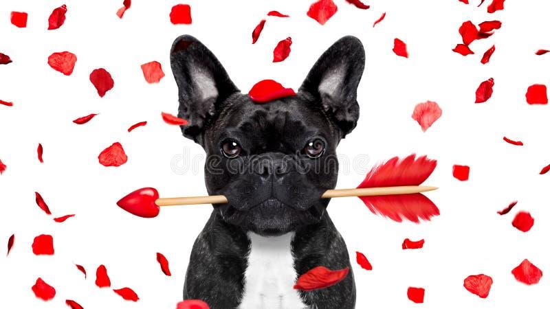 Verrückt im Liebesvalentinsgrußhund stockfoto