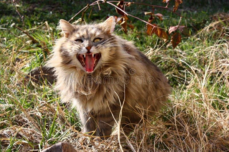 Verrückte Katze lizenzfreies stockfoto