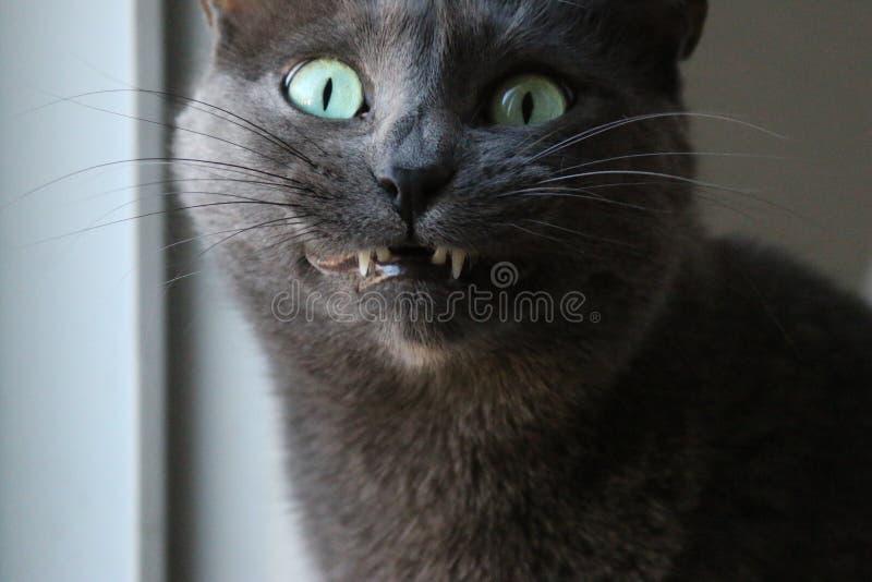 Verrückte Katze lizenzfreie stockfotos