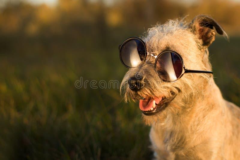 Verrückter lustiger Hund, tragende Gläser stockbilder