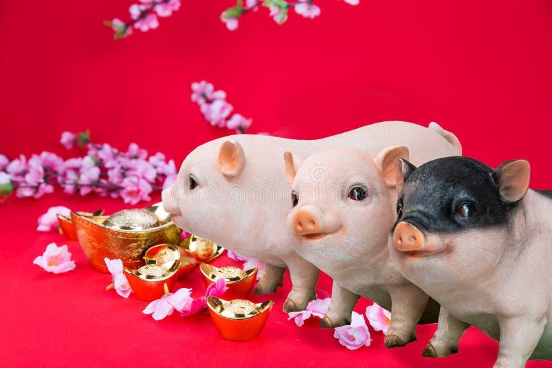 Verraco del cerdo con la flor de la flor de cerezo, 2019 Años Nuevos chinos imagen de archivo