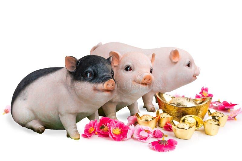 Verraco del cerdo con la flor de la flor de cerezo, zodiaco chino del Año Nuevo 2019 imagenes de archivo