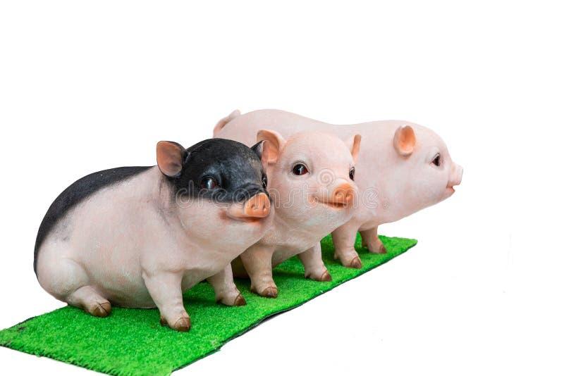 Verraco del cerdo en el fondo blanco, zodiaco chino del Año Nuevo 2019 imágenes de archivo libres de regalías