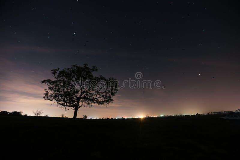 Verrassing onder het sterrenlicht stock foto