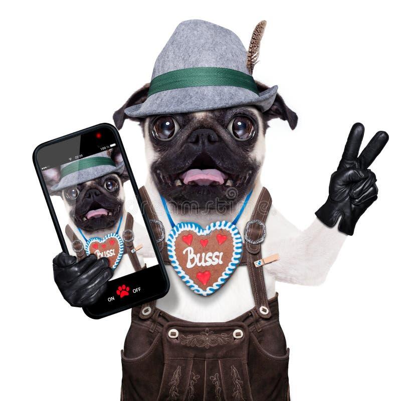 Verraste gekke Beierse hond stock afbeelding