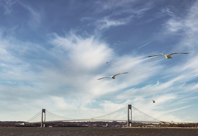 Verrazzano Bridge on the sunny day. Verrazzano-Narrows Bridge with flying seagulls stock photography