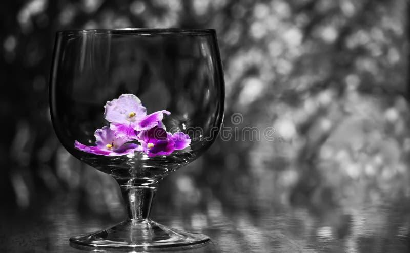 Verre à vin et fleur image stock
