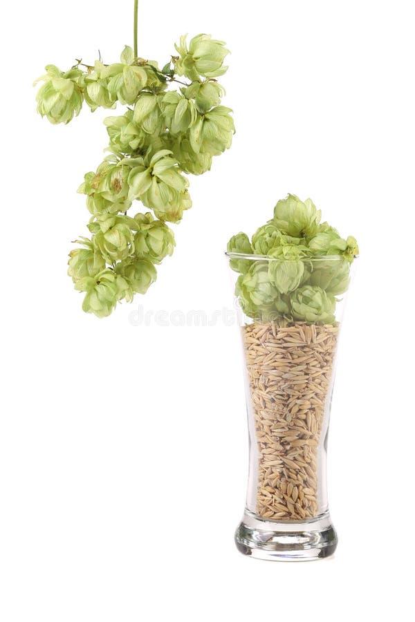 Verre d'houblon et d'orge verts frais photo libre de droits