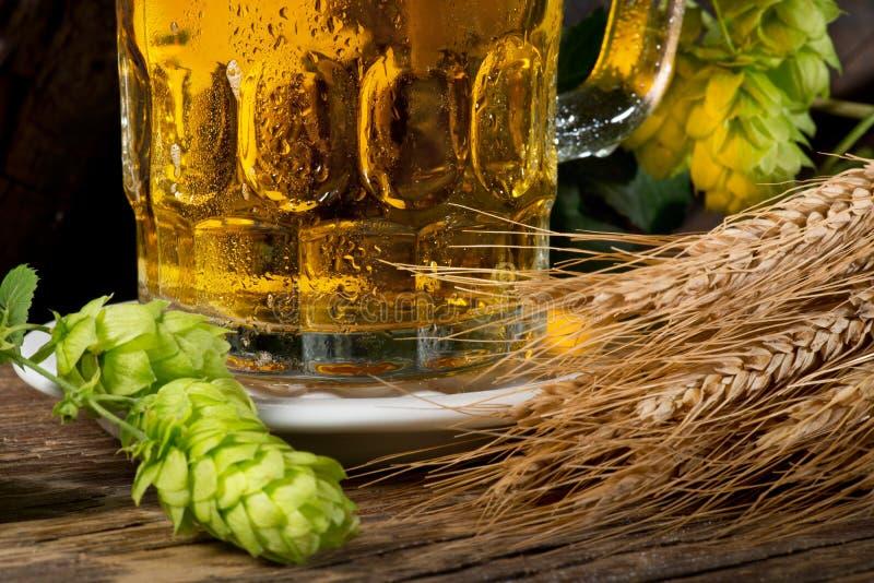 Verre de bière avec les houblon et l'orge photographie stock