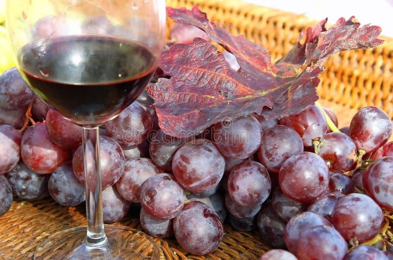 Verre de vin rouge avec des groupes de raisins mûrs image libre de droits
