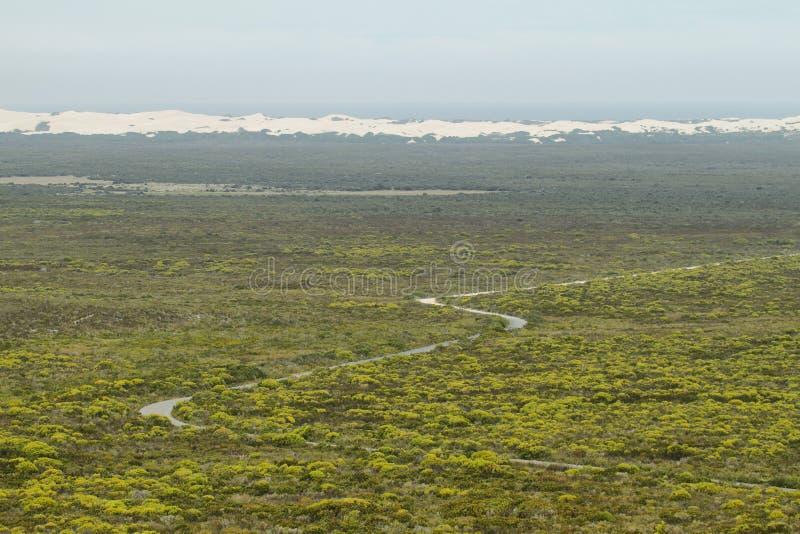 Verre woestijnduinen in het natuurreservaat van DE hoop stock afbeelding