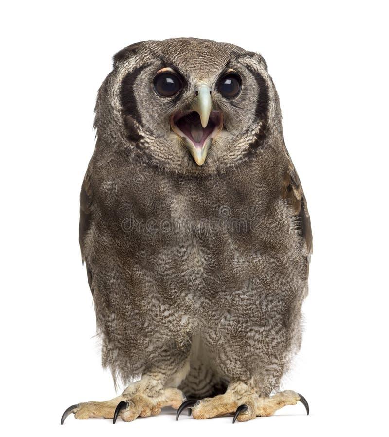 Free Verreaux S Eagle-owl - Bubo Lacteus Stock Image - 63253711