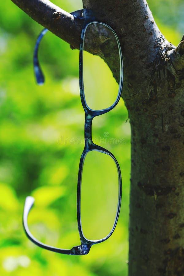 Verres modernes de style accrochant sur une branche d'arbre Beaux verres d'optométrie sur le fond naturel vert Photo conceptuelle photo stock