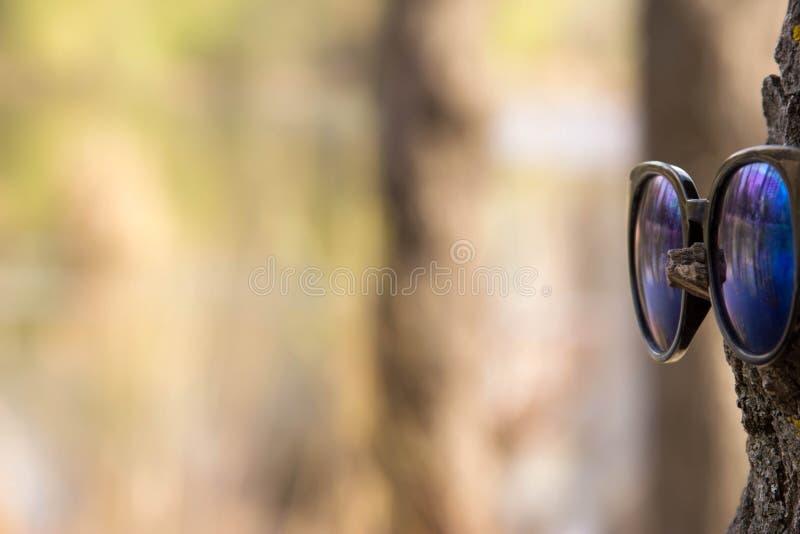 Verres sur l'arbre image stock