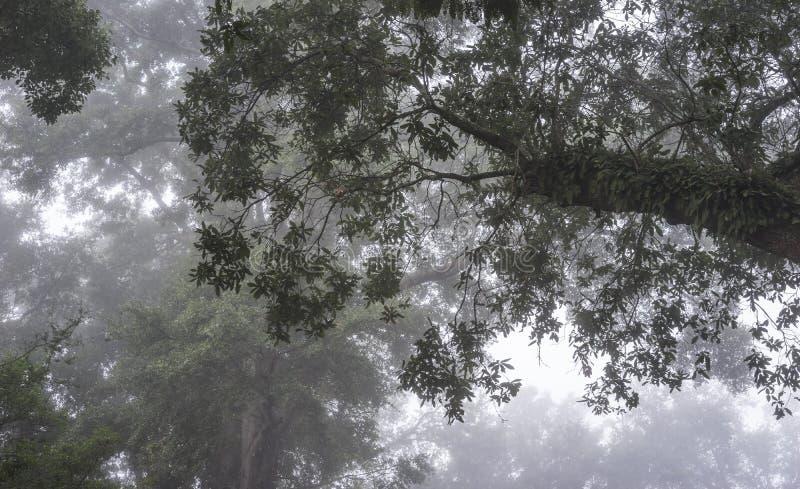 Verrijzenisvaren op Live Oak Tree in het Diepe Zuiden stock foto's