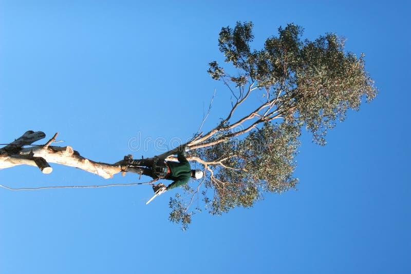 Verringern der Bäume stockfotos