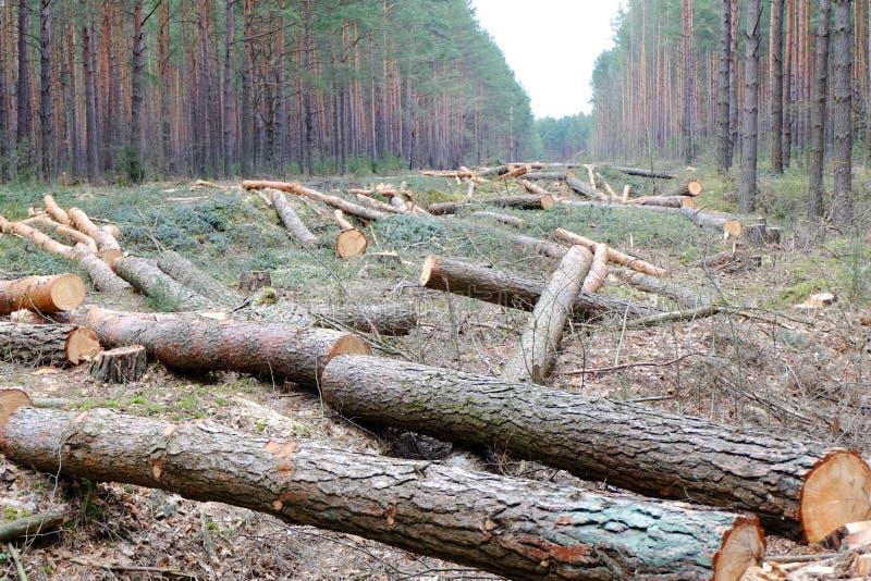 Verringern der Bäume lizenzfreies stockfoto