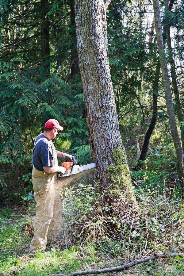 Verringern des großen Baums lizenzfreie stockfotografie