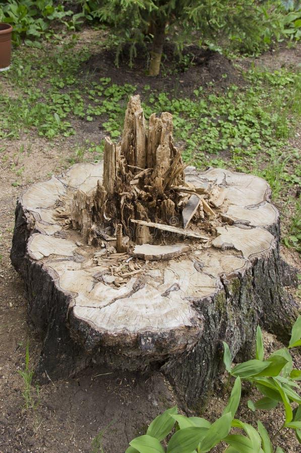 Verringern Sie den Stamm eines faulen Baums stockfotos