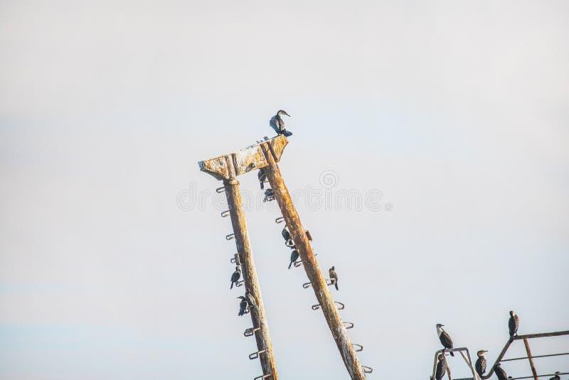 Verrosteter Schiffbruch auf dem Ufer mit dem Kap-Kormoranvogelkämpfen stockfotografie