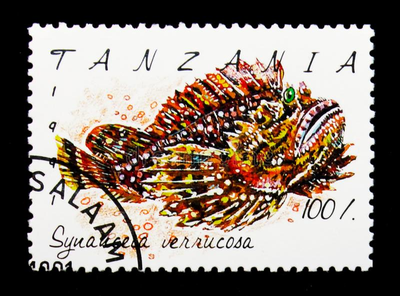 Verrucosa van ertsaderstonefish Synanceia, Vissen serie, circa 1991 stock foto's