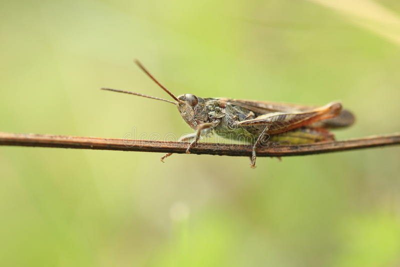 Verruga-mordedor imagen de archivo. Imagen de insecto - 43754693